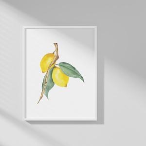 Citrom akvarell nyomat , Művészet, Festmény, Akvarell, Festészet, Mindenmás, Meska