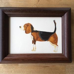 Beagle akvarell festmény, keretben, NoWaste, Otthon & lakás, Dekoráció, Kép, Képzőművészet, Festmény, Akvarell, Festészet, Saját készítésű, akvarell festmény, keretben. \nBeagle kutya. \n\nKeret méretei: 13x18 cm a belső méret..., Meska