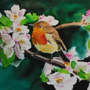 Vörösbegy, madárka, május, természet, tavasz (romandoramaria) - Meska.hu