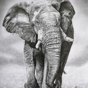 Elefánt- grafit rajz nyomat, Művészet, Művészi nyomat, Fotó, grafika, rajz, illusztráció, Eredeti grafit rajzom alapján készült nyomat. Rajzaim képek alapján készítem.\nKövetkező méretekben é..., Meska