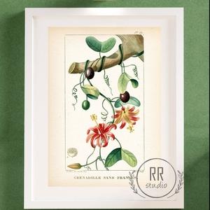 Vintage Botanikai illusztráció, otthoni dekoráció falikép, KERET NÉLKÜL, Otthon & Lakás, Dekoráció, Falra akasztható dekor, Fotó, grafika, rajz, illusztráció, A4 Papír Print Nyomtatás \n\nBOTANIKAI ILLUSZTRÁCIÓ:\nFrancia lexikonból digitalizálva, grafikák 1800-a..., Meska