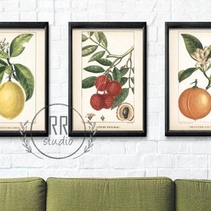 3 DB-os szett, Vintage Botanikai illusztráció, otthoni dekoráció falikép, KERET NÉLKÜL, Otthon & Lakás, Dekoráció, Falra akasztható dekor, Fotó, grafika, rajz, illusztráció, A4 Papír Print Nyomtatás \n3DB-os SZETT / Az ár 3db papír print nyomtatásra vonatkozik\n\nBOTANIKAI ILL..., Meska