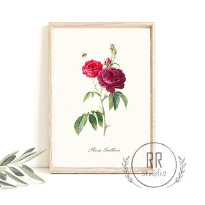 Vintage Rózsa, méhecske,  Botanikai illusztráció, otthoni dekoráció falikép, KERET NÉLKÜL, Otthon & Lakás, Dekoráció, Falra akasztható dekor, Fotó, grafika, rajz, illusztráció, A4 Papír Print Nyomtatás \n\nBOTANIKAI ILLUSZTRÁCIÓ\nA vintage hatásért textúrált, krémes-törtfehér műv..., Meska