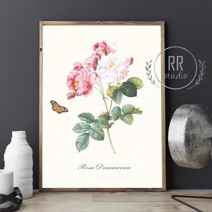 Vintage Rózsa, pillangó, Botanikai illusztráció, otthoni dekoráció falikép, KERET NÉLKÜL, Otthon & Lakás, Dekoráció, Falra akasztható dekor, Fotó, grafika, rajz, illusztráció, A4 Papír Print Nyomtatás \n\nBOTANIKAI ILLUSZTRÁCIÓ\nA vintage hatásért textúrált, krémes-törtfehér műv..., Meska