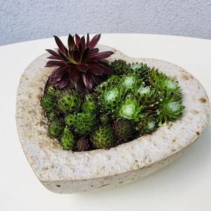 Betonszív kövirózsával, Otthon & Lakás, Dekoráció, Virágkötés, Szív alakú  könnyített beton növénytartót készítettünk, melybe kövirózsákat ültettünk. \n\nMérete: kb ..., Meska