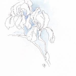 nyomat akvarellről, Papír, Dekorációs kellékek, Festett tárgyak, festészet, Papírművészet, Íriszt ábrázoló akvarelleimet a rég várt tavaszi meleg ihlette, toll és akvarell festék technikával..., Alkotók boltja
