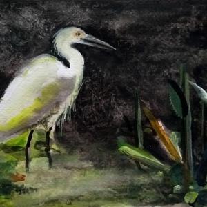 Kócsag, Művészet, Akvarell, Festmény, A 12x18-as akvarellen egy kócsag látható. A kép jellegzetes, sötét árnyalatokat és fiktív növényeket..., Meska