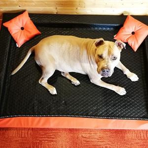 Új, egyedi, minőségi, lehúzható és mosható kutyafekhely, kutyaágy, Otthon & lakás, Lakberendezés, Állatfelszerelések, Kutyafelszerelés, Varrás, -Mérete: 140 cm  X 100 cm ; perem magassága 10 cm\n-Fekvőfelülete 3cm vastag félkemény szivacsmatrac\n..., Meska