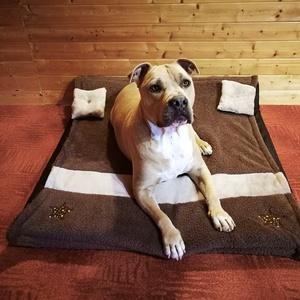 Új, minőségi, leházható és moshatóó kutyafekhely, kutyaágy, Otthon & lakás, Lakberendezés, Állatfelszerelések, Kutyafelszerelés, Varrás, -Mérete: 90 cm X 90 cm ; magassága 15 cm ; fekvőfelülete 5 cm + a kétrétegű plüss takaró\n-Cipzáron k..., Meska