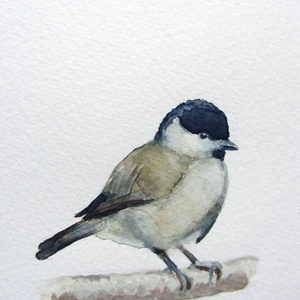 Akvarell madárkák: cinke sorozat - kékcinke, széncinke, barátcinege (szolnokiagnes) - Meska.hu