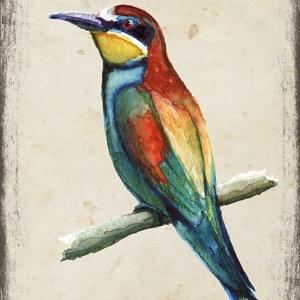 4 db-os üdvözlőlap csomag: fenyőrigó-gyurgyalag-házi rozsdafarkú-jégmadár, Képzőművészet, Otthon & lakás, Festmény, Naptár, képeslap, album, Képeslap, levélpapír, Festészet, Akvarell madártanulmányaim most már képeslap formájában is elérhetőek.\n\nAz üdvözlőlapok mérete 148x1..., Meska