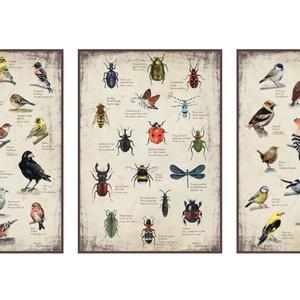 3 db határozó egy csomagban, Otthon & lakás, Dekoráció, Képzőművészet, Festmény, Festészet, A kétféle madaras és egy rovaros memóriajátékaimhoz készült határozók grafikája keretezhető változat..., Meska
