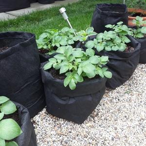Ültető zsák 30 cm átmérőjű x 55 cm magas (5 db/ csomag) /  burgonya termesztéséhez , Otthon & Lakás, Ház & Kert, Növény & Veteményes, Varrás, Ültetőzsák, teraszra, balkonra, kis méretű kertekbe.\nAlkalmas burgonya termesztéséhez.\n- hajtogasd l..., Meska