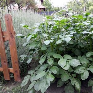 Ültető zsák 30 cm átmérőjű x 55 cm magas (5 db/ csomag) /  burgonya termesztéséhez  - Meska.hu