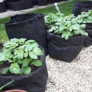 Ültető zsák 30 átmérőjű x 55 cm magas (3 db/ csomag) / burgonya termesztéséhez , Otthon & Lakás, Ház & Kert, Növény & Veteményes, Varrás, Ültetőzsák, teraszra, balkonra, kis méretű kertekbe.\nAlkalmas burgonya termesztéséhez.\n- hajtogasd l..., Meska