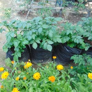 Ültető zsák 30 cm átmérőjű x 55 cm magas/ burgonya termesztéséhez , Növény & Veteményes, Ház & Kert, Otthon & Lakás, Varrás, Ültetőzsák, teraszra, balkonra, kis méretű kertekbe.\nAlkalmas burgonya termesztéséhez.\n- hajtogasd l..., Meska