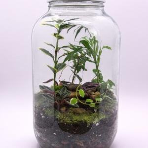 30m magas florárium 5 féle növénnyel , Otthon & lakás, Dekoráció, Dísz, Mindenmás, Ha nem az erősséged a növények gondozása, azonban oda vagy értük, akkor a floráriumok tökéletesek ne..., Meska