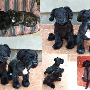 Kép alapján készülő kutya hasonmás plüss készítés, Gyerek & játék, Játék, Otthon & lakás, Dekoráció, Varrás, Gyurma, Neked csak annyi a dolgod, hogy küldj nekem pár jó minőségű képet a kutyusodról! :)\n\nFONTOS!! Kérlek..., Meska