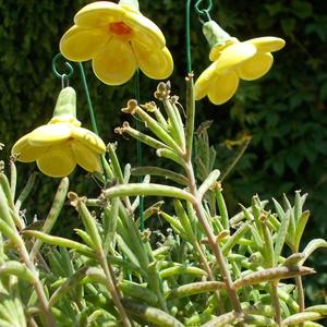 """Csengő-bongó    virágok, Csokor & Virágdísz, Dekoráció, Otthon & Lakás, Kerámia, .Fehérre égő agyagból készítettem ezeket a  virágokat.   A teljes virágfej átmérője 4,5 cm,\"""" magassá..., Meska"""