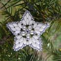 Ezüstcsillag - Ezüst, fehér gyöngy karácsonyfadísz