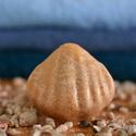 Sószappan kecsketejjel, Szépségápolás, Férfiaknak, Szappan, tisztálkodószer, Egészségmegőrzés, Sószappan    Ennek a különleges szappannnak 80%a tengeri só,egyébként többi összetevöje meg..., Meska