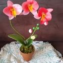 Orchidea harisnyából, A harisnyavirágot az elmúlt hónapban egy kedves...