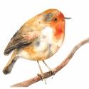 Vörösbegy - Print (Akvarell), Képzőművészet, Otthon, lakberendezés, Illusztráció, Rajongok a madarakért, csodálatos teremtmények és egy-egy ilyen illusztráció egészen meg tudja válto..., Meska