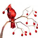 Bíboros Madárka - Print (Akvarell), Bíboros madár őszi termések között.  Az ered...