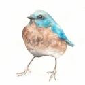 A boldogság kék madara - Print (Akvarell), Képzőművészet, Otthon, lakberendezés, Illusztráció, Rajongok a madarakért, csodálatos teremtmények és egy-egy ilyen illusztráció egészen meg tudja válto..., Meska