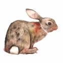 Nyuszi - Print (Akvarell), Képzőművészet, Dekoráció, Illusztráció, Kép, Az eredeti illusztráció akvarellel készült, a print A/4-es, 250 g/m2-es papírra van nyomtatva.  - Mi..., Meska