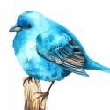 Kék madárka - Print (Akvarell), Képzőművészet, Otthon, lakberendezés, Illusztráció, Az eredeti illusztráció akvarellel készült, a kép A/4-es, 250 g/m2-es papírra van nyomtatva.  ------..., Meska