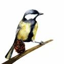 Cinke - Print (Akvarell), Képzőművészet, Otthon, lakberendezés, Illusztráció, Az eredeti illusztráció akvarellel készült, a kép A/4-es, 250 g/m2-es papírra van nyomtatva.  ------..., Meska
