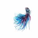 Sziámi harcoshal - Print (Akvarell), Képzőművészet, Otthon, lakberendezés, Illusztráció, Az eredeti illusztráció akvarellel készült, a kép A/4-es, 250 g/m2-es papírra van nyomtatva.  ------..., Meska