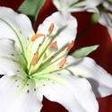 Cukorvirág fehér liliom, Dekoráció, Esküvő, Otthon, lakberendezés, Esküvői dekoráció, Mindenmás, Egyedi kézzel, drótozott technikával készített cukorvirág.Megtévesztésig hasonlítanak az eredetihez..., Meska