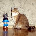 JutiFalat-tartó cicáknak, Állatfelszerelések, Mindenmás, Macska kellékek, Furcsaságok, Mindenmás, Zárható JutiFalat - tároló cicatartóknak..Amit a kedvenc és a gazdija is megérdemel. Praktikus mego..., Meska