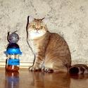 JutiFalat-tartó cicáknak, Állatfelszerelések, Mindenmás, Macska kellékek, Furcsaságok, Zárható JutiFalat - tároló cicatartóknak..Amit a kedvenc és a gazdija is megérdemel. Praktiku..., Meska