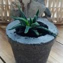 Beton virágtartó, élő növénnyel, Dekoráció, Kőfaragás, Betonból készült virágtartó (asztali dísz), élő növénnyel. Méretei: magassága (növény nélkül) 9 cm,..., Meska