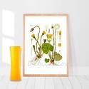 """Martilapu, vintage botanikai illusztráció, növényes falikép, virágos lakásdekoráció, tavaszi hangulat, A4-es print, Dekoráció, Otthon, lakberendezés, Falikép, Martilaput ábrázoló print, vintage illusztráció. Az eredeti, szkennelt képet digitálisan """"megtisztog..., Meska"""