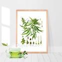 """Vadkender, cannabis, botanikai illusztráció, növényes falikép, herbárium, kender, vintage ábrázolás, A4 , Otthon, lakberendezés, Dekoráció, Falikép, Kép, Vadkendert ábrázoló print, vintage illusztráció. Az eredeti, szkennelt képet digitálisan """"megtisztog..., Meska"""