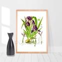 """Nőszirom, írisz, vintage illusztráció, növényes falikép, virágos lakásdekoráció, lila virág, A4-es print, kert, Otthon, lakberendezés, Dekoráció, Falikép, Kép, Nőszirmot (Iris) ábrázoló print, vintage illusztráció. Az eredeti, szkennelt képet digitálisan """"megt..., Meska"""