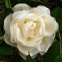 Selyem rózsa kitűző ( vajszínű), Ékszer, Bross, kitűző, A kitűző 12 cm nagyságú. Anyaga tüllös-selyem.   Kézzel mosható.  Kitűnő alkalmi viselet, vagy a hét..., Meska