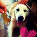 Egyedi kutyusportré nyaklánc saját kedvencedről, Ékszer, Nyaklánc, És te hordanád a kutyusod a nyakadban?  Kézzel fűrészelt, vésett egyedi kutyusportré nyaklánc  Küldj..., Meska