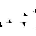 Vadlibák falmatrica, Dekoráció, Otthon, lakberendezés, Falmatrica, Falikép, Fotó, grafika, rajz, illusztráció, Vadlibák repülnek V alakban, azaz elhúznak melegebb vidék felé.   A második fotón látható az egész ..., Meska