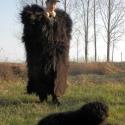 Suba, bunda - pásztor viselet/ betlehemes, regős, vadász kellék - fekete, Férfiaknak, Képzőművészet, Hagyományőrző ajándékok, Legénylakás, Varrás, Férjem készíti ezt a viseletet, egy öreg pásztortól tanulta meg az utolsó órákban. 100%-ig kézzel v..., Meska