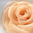 Barackszín rózsa, Barackrózsaszín organza szirmok alkotják ezt a ...