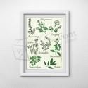 Egyedi kép fűszernövényekkel, Dekoráció, Kép, Egyedi grafikával készült kép fűszernövényekkel. A/4-es méretű. A kép kiváló minőségű kreatív karton..., Meska