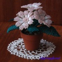 Barack cinerária gyöngyből cserepes virág, asztaldísz, Dekoráció, Otthon, lakberendezés, Kaspó, virágtartó, váza, korsó, cserép, 5 cm átmérőjű cserépbe készítettem ezt a nagyon mutatós virágot. 5 szál -5 cm átmérőjű..., Meska
