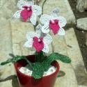 Lepke orchidea fehér színben., Egy újabb változata a lepke orchideának.  3 vir...