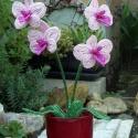 Orchidea gyöngyből, Ismét egy orchidea ,ami 4 virág két bimbó és ...