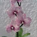 Lepke orchidea 3, 1 bimbó és 4 virág 3 levél alkotja az  orchide...